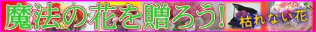 Puriza270206_80